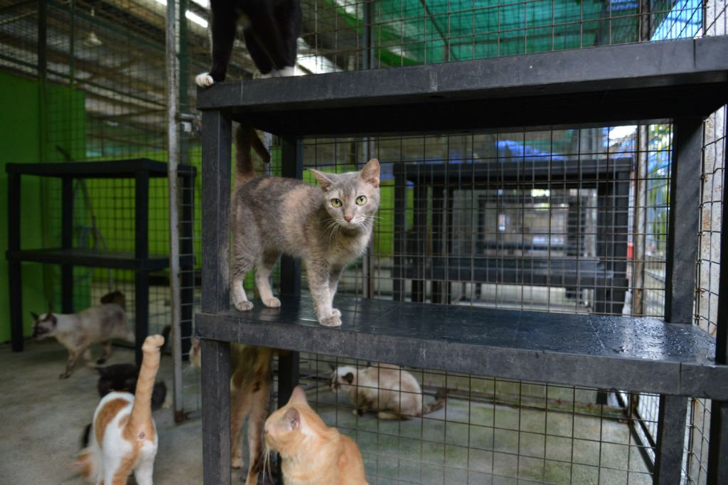 Kittycare took in 17 cats from Farmart when the owner died